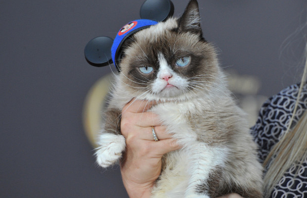 Claws out in Grumpy Cat trademark dispute