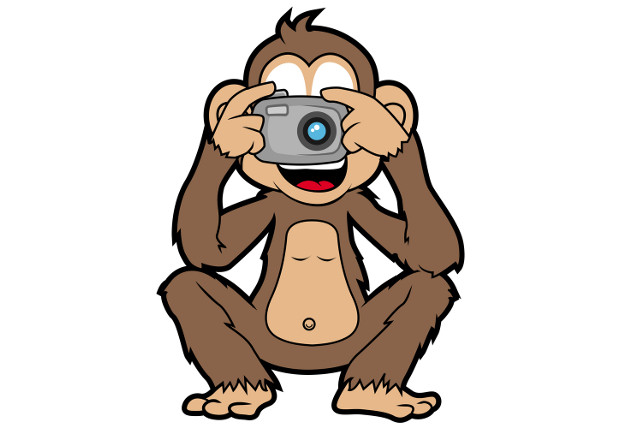 Monkey 'selfie' has no copyright owner, says Wikimedia